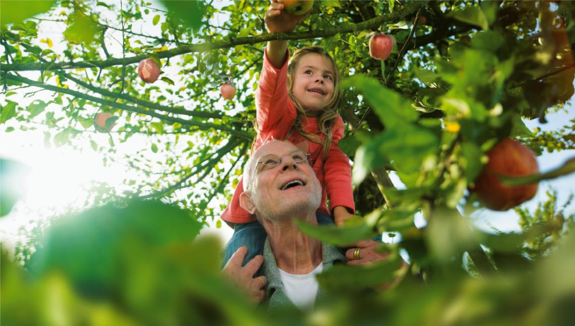 Opa mit Enkelin auf den Schultern pflücken Äpfel