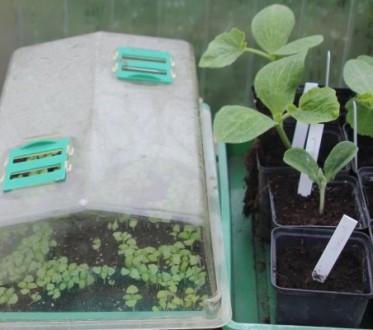Jungpflanzen in Töpfen