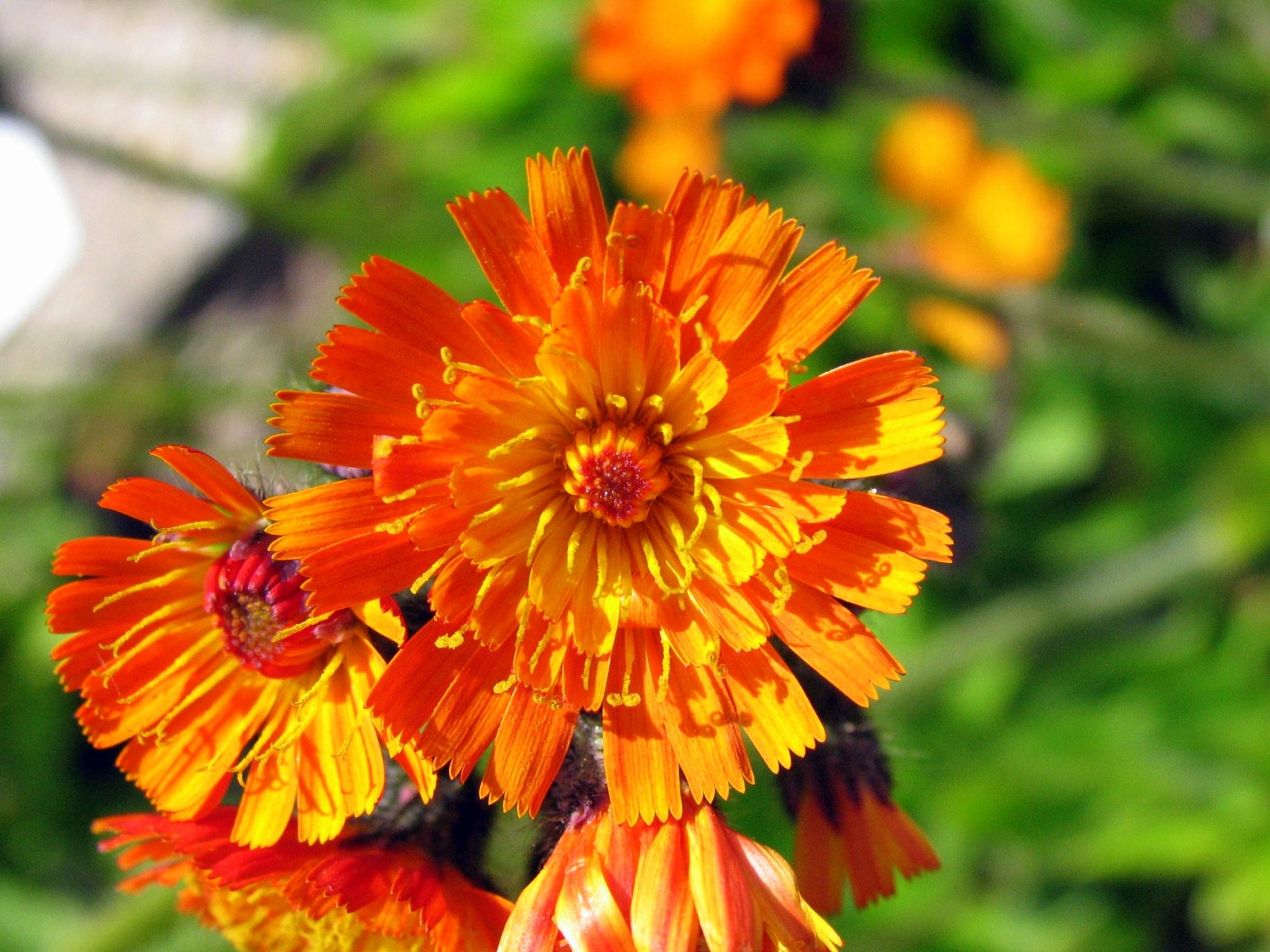 Orange Die Farbe Der Optimisten Bayern Blüht