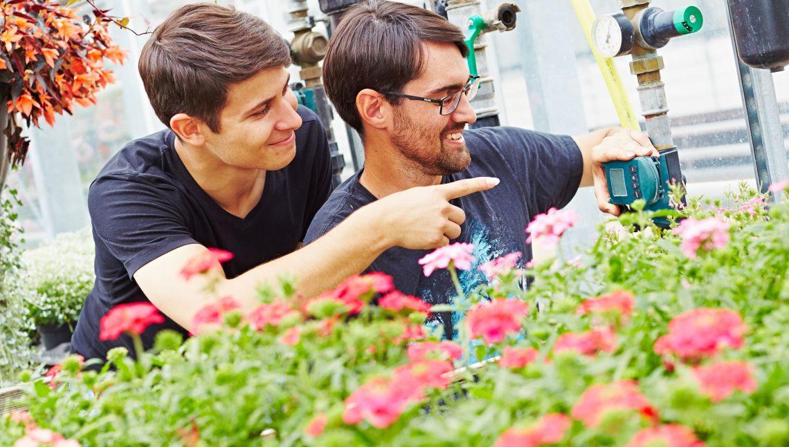 Zwei Gärtner im Gewächshaus