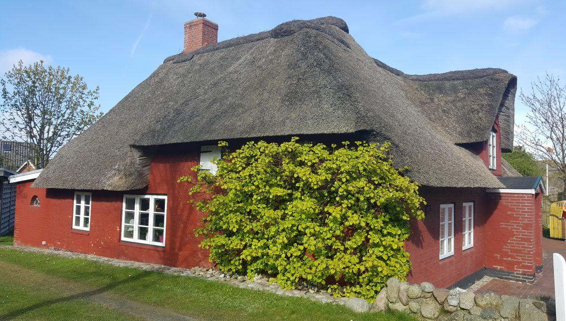 Kletterpflanze an einem Haus