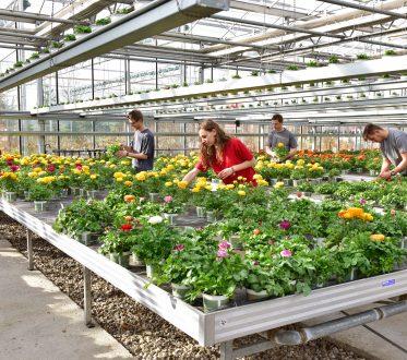 Auszubildende im Gewächshaus mit vielen Blumen