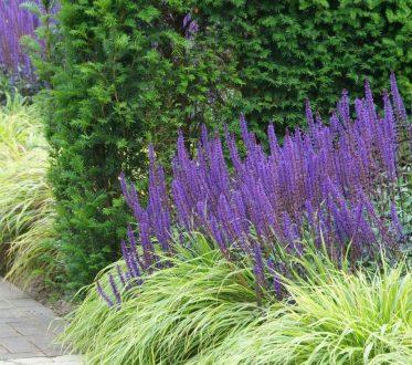 Hecke neben Blumen und Gräser