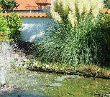 Schilf am Teich