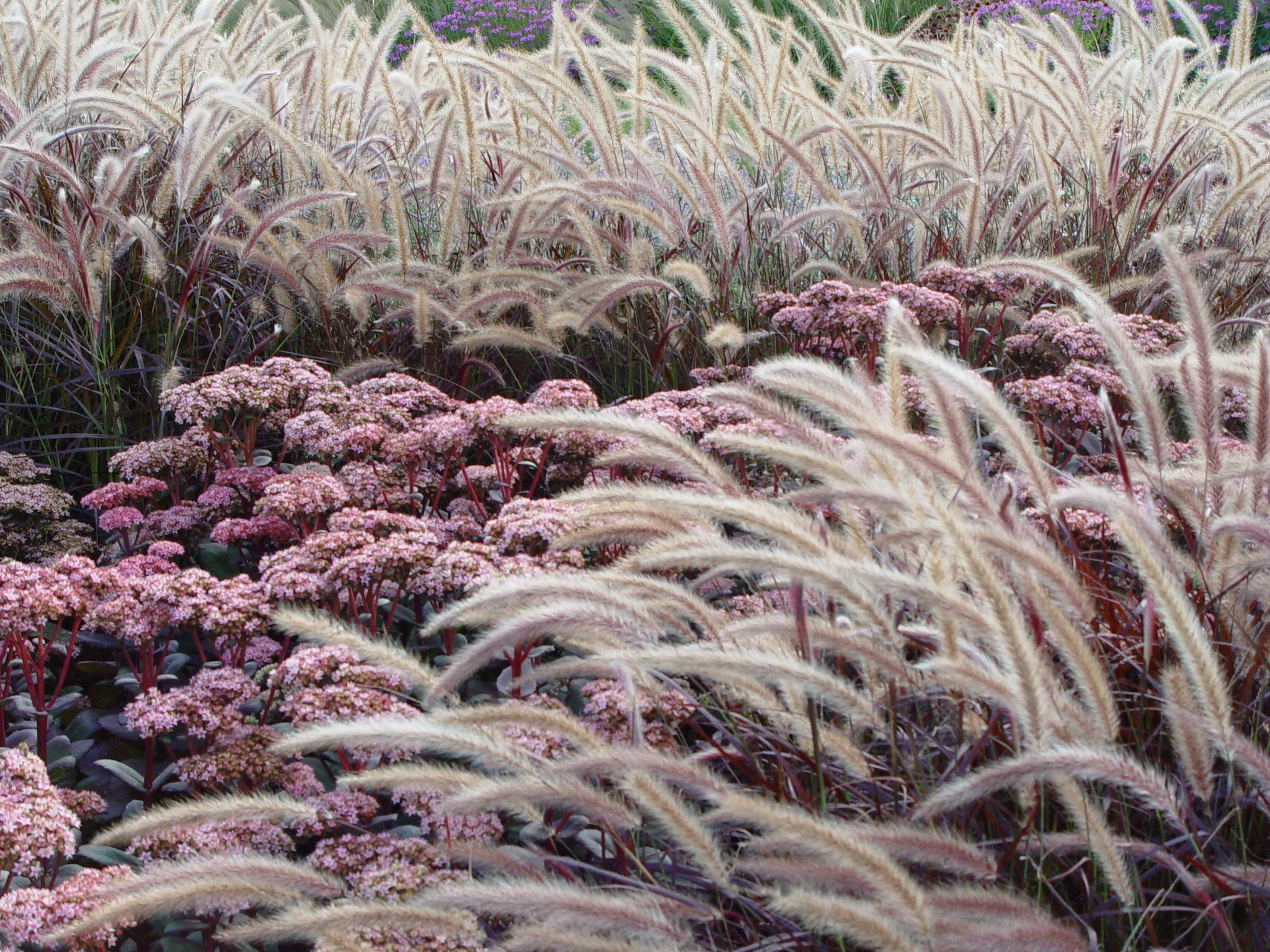 14.000 Arten Von Gräsern Mit Ganz Unterschiedlichen Wuchsformen, Farben Und  Standortansprüchen.