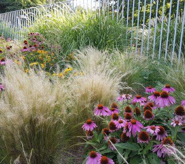 Verschiedene Gräserarten und Blumen
