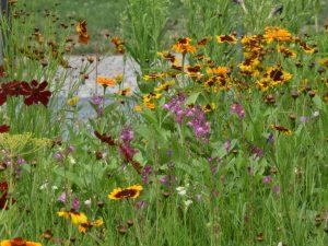 Viele bunt blühende Blumen auf einer Wiese.