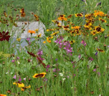 Viele bunte Blumen auf einer Wiese