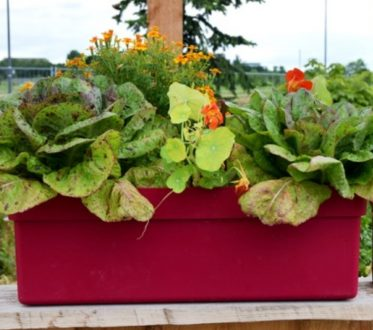 Übertopf mit Salat und Blumen